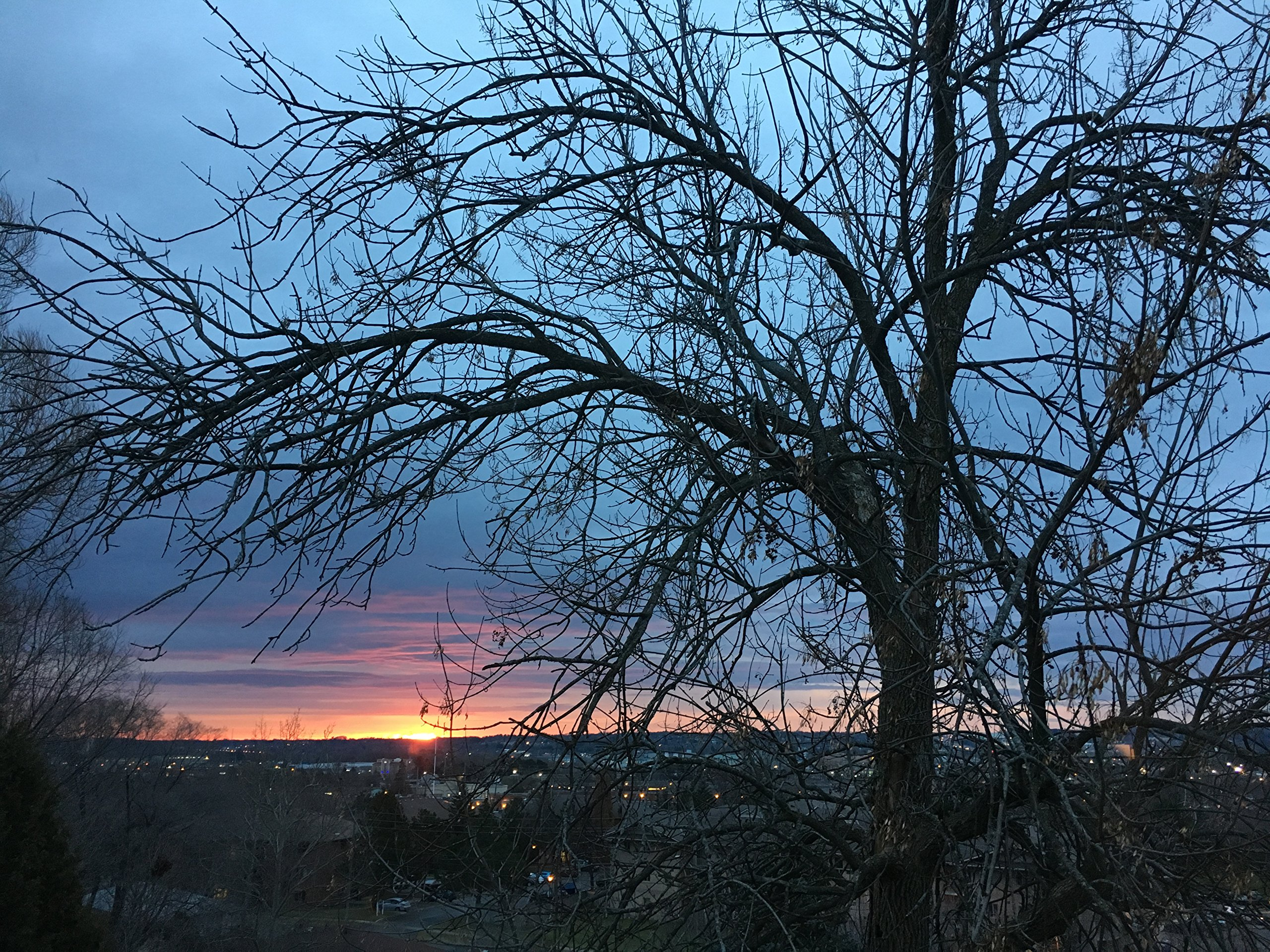 Tree And Sunset by