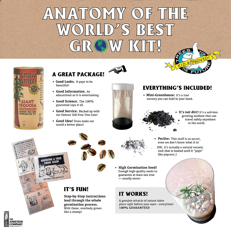 Venus Fly Trap | Carnivorous Plant Grow Kit | The Jonsteen Company