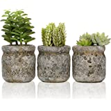 Set of 3 Realistic Artificial Green Succulent Plants in Rustic Gray Round Mason Jar Style Planter Pots