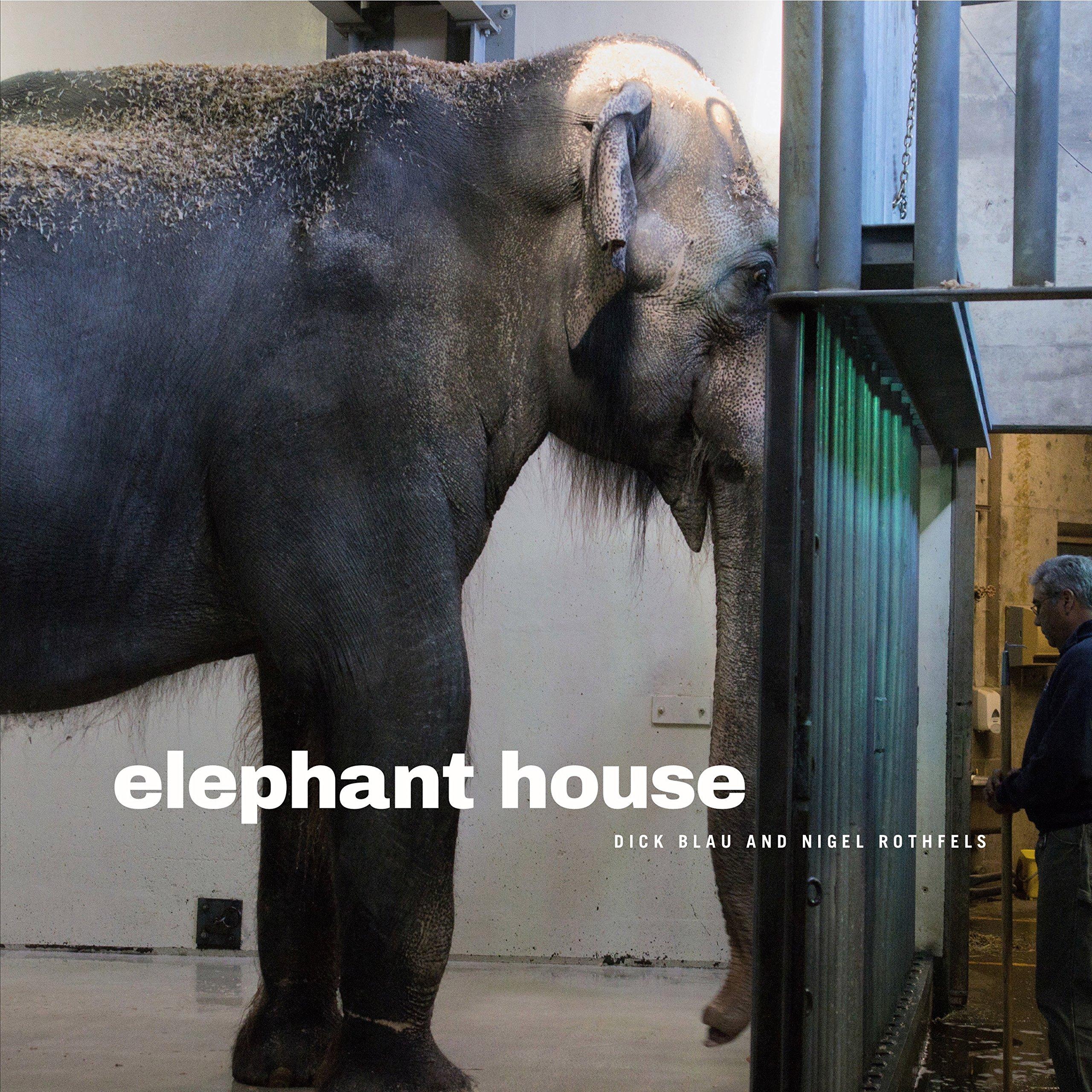 Dick elephant Animal Penis