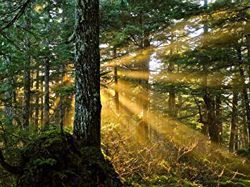 NATURE PHOTO SUNBEAMS FOREST TREES 12 X 16 INCH ART PRINT POSTER PICTURE HP2257
