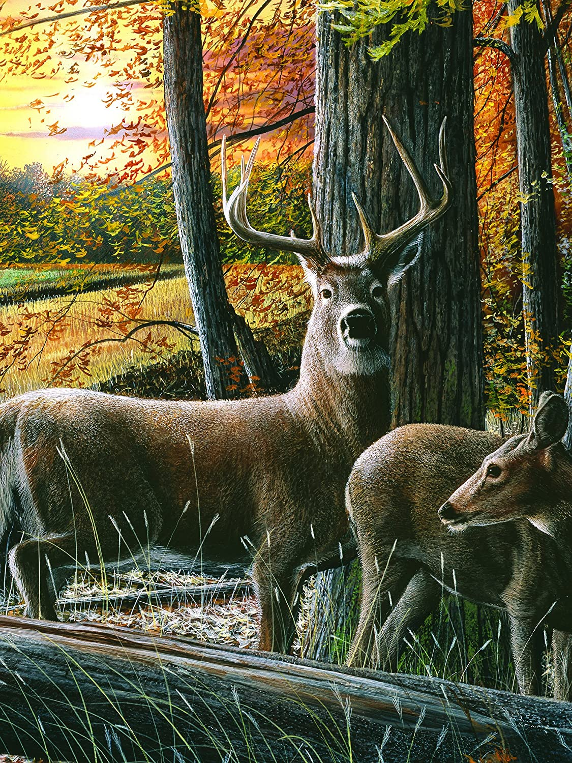 Autumn Whitetails LED Lighted Canvas Wall Art 16 x 12 Inch ...