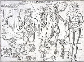 Amazon Com Wall Art Impressions Anatomy Of Human Body