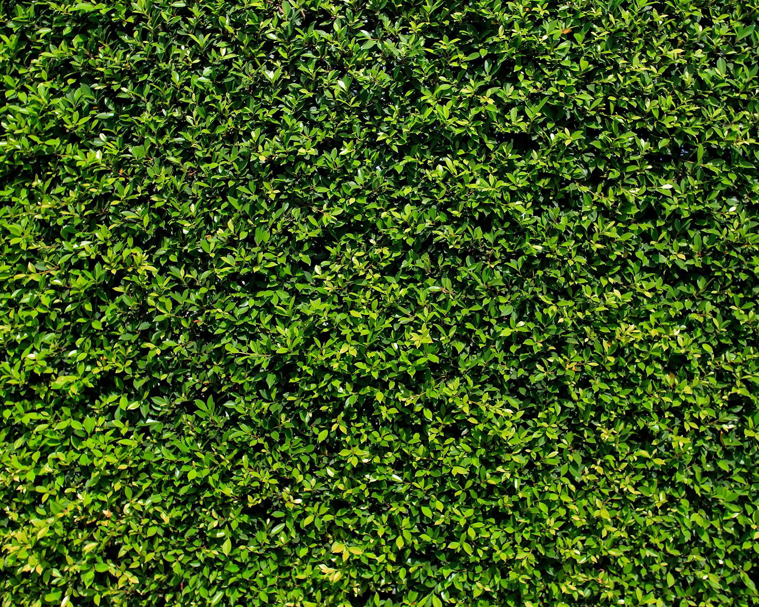 Green Grass Wall Backdrop Bush Lawn Wall Leafy Leaves Wall Birthday Party Decoration Wrinkle Free Cloth Printed Fabric Photography Background (G0742, 10' Wide by 8' Tall) by BestDrop