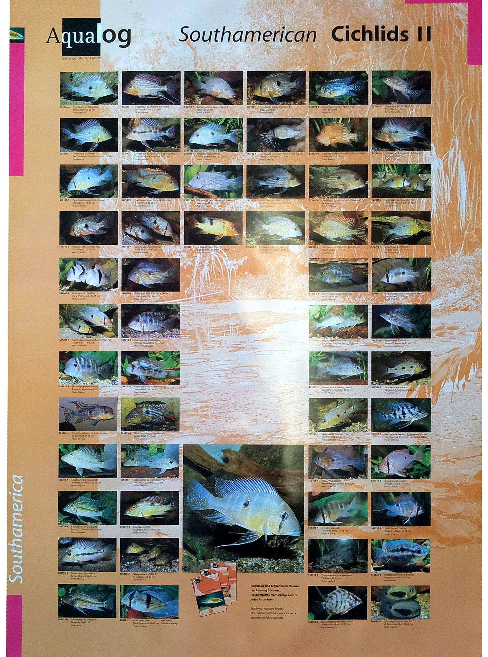 AQUALOG: Poster Cichlids 2 (Geophagus/Eartheaters)