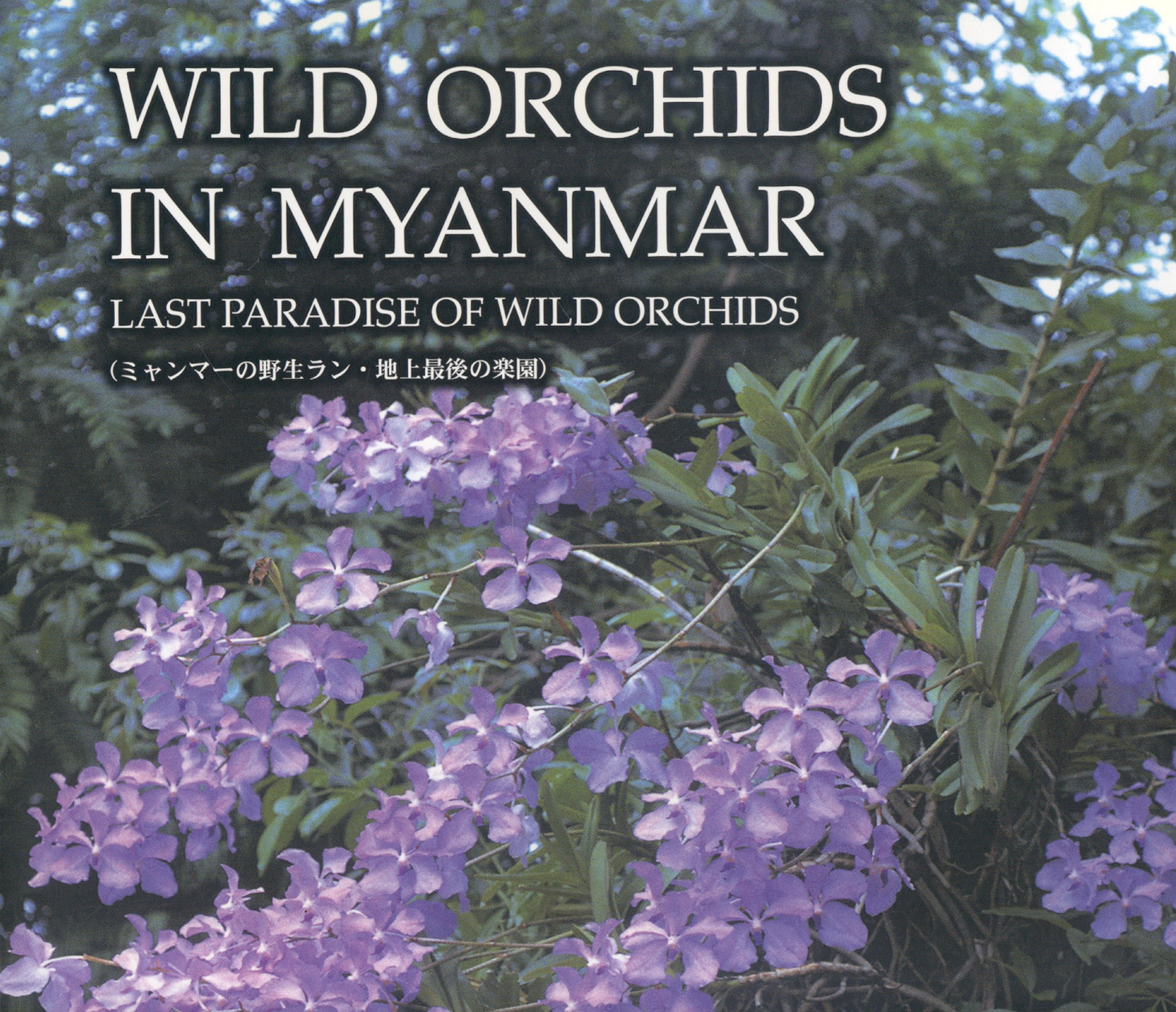 Wild Orchids In Myanmar  Last Paradise Of Wild Orchids  Highlight Edition