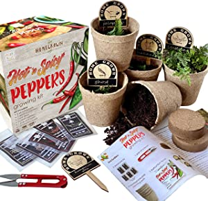 Indoor Hot and Spicy Pepper Garden Seed Starter Growing Kit Gardening Gift - Jalapeno, Habanero, Hungarian Yellow Wax, Ghost, and Cayenne