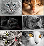 """Cat Greeting Cards - Blank on the Inside - Includes Cards and Envelopes - 5.5""""x4.25"""" (12 Pack)"""