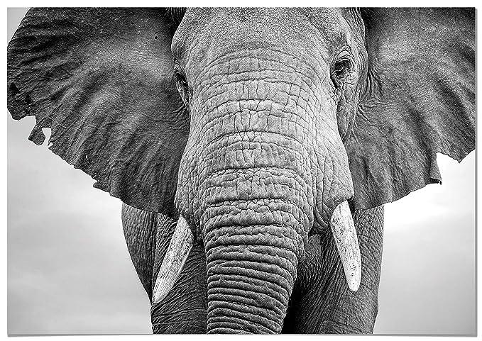 Panorama Poster Elefante 30X21Cm - Impreso En Pape...