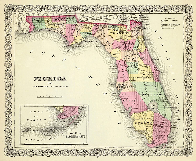 Florida Colton 1856-28 x 23