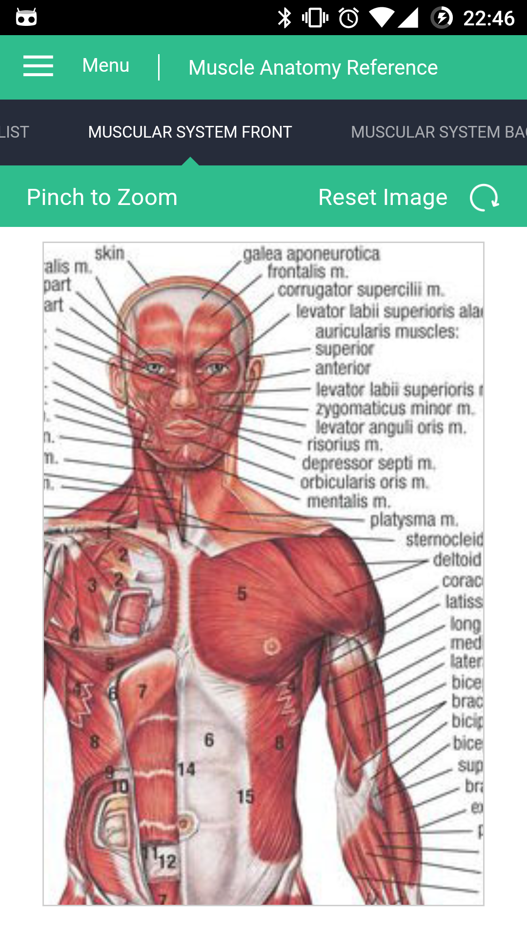 Amazon Muscle Anatomy Reference Guide Appstore For Android