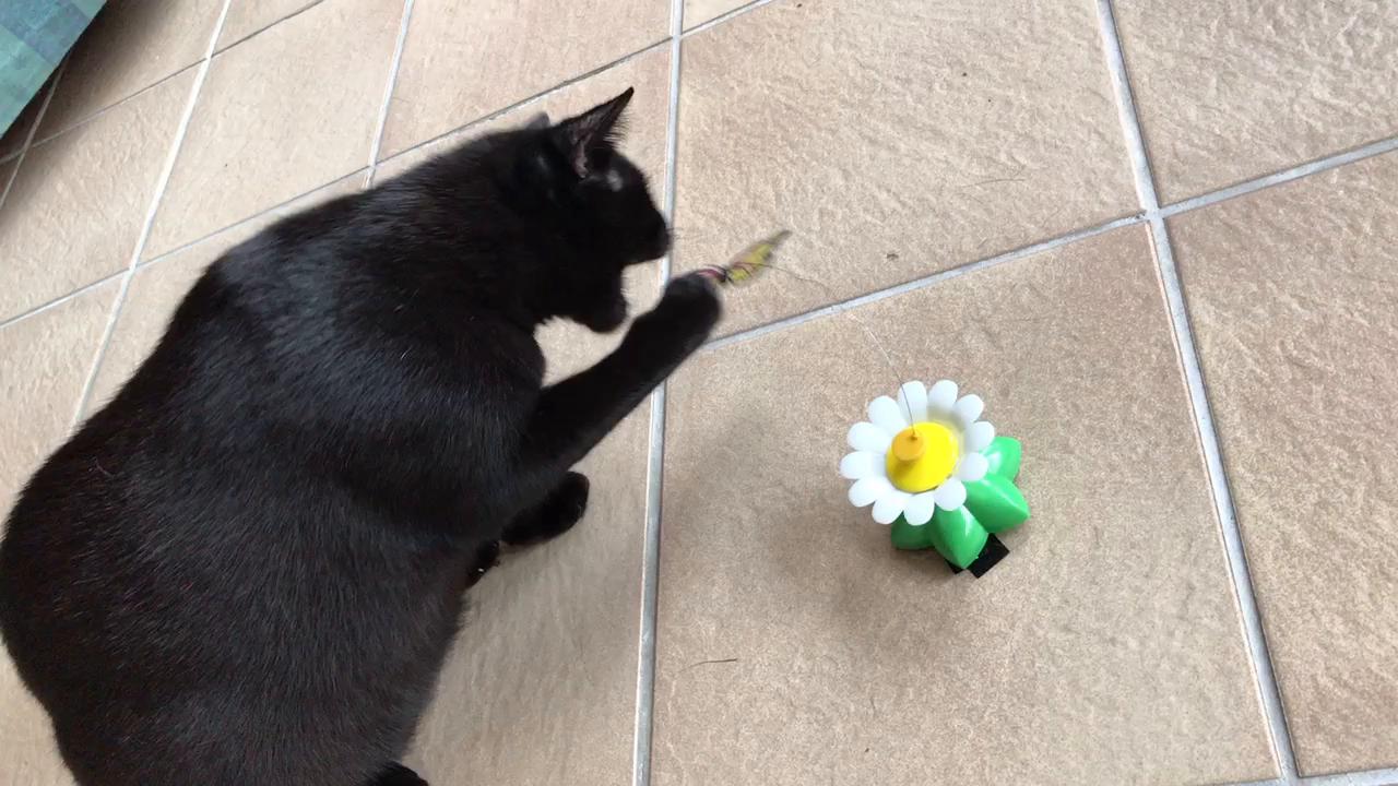 Lictin Katzenspielzeug Katze Spielen drehendem Schmetterling ...