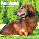 Dachshunds 2018 16 Month Wall Calendar 12 x 12 inches Bright Day Calendars Publishing