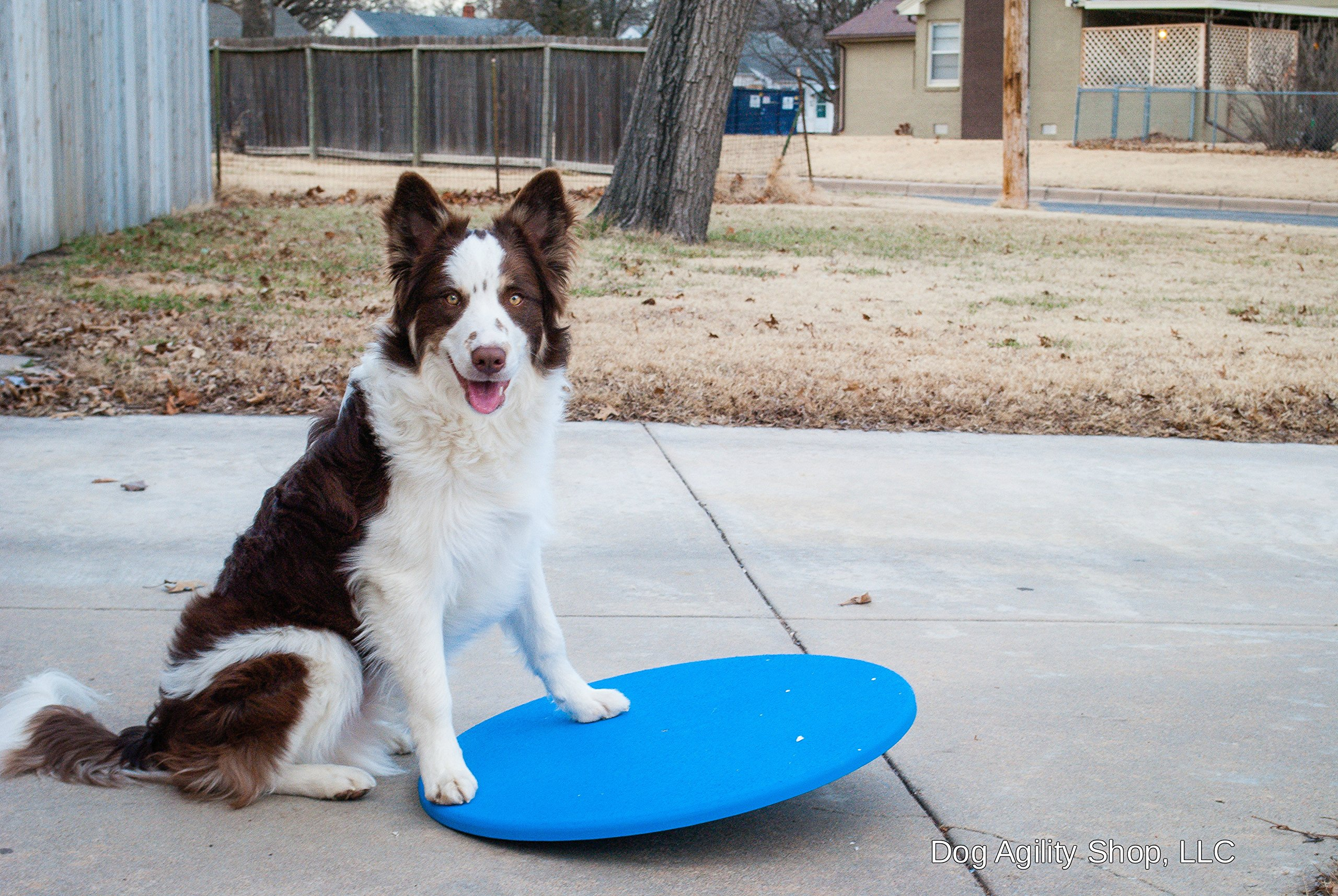 Dog Agility Equipment Wobble Board 22'' | Blue by The Dog Agility Shop