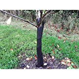 50 X 2FT Spiral Rabbit Shelters Tree Guards Hedge Protector 38MM Dia 60CM