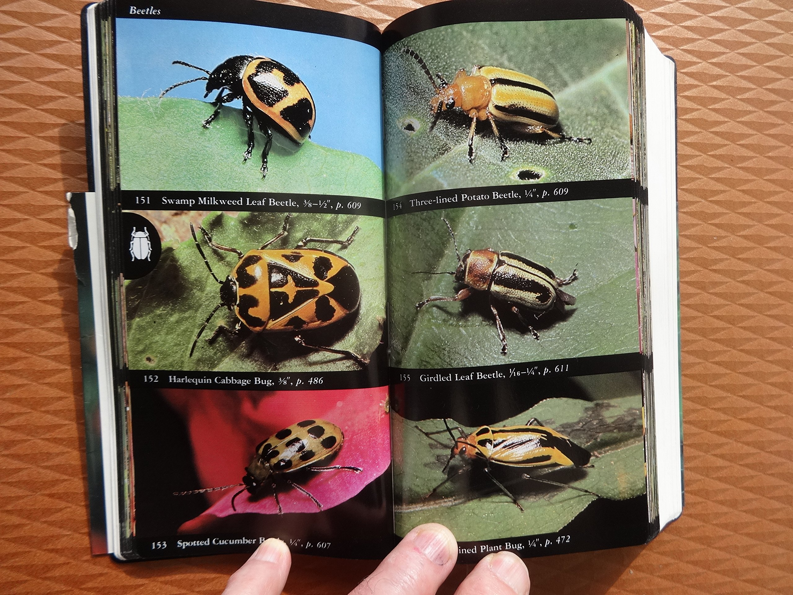 Amazon.com: National Audubon Society Field Guide to North American Insects  & Spiders (9780394507637): Lorus & Margery Milne: Books