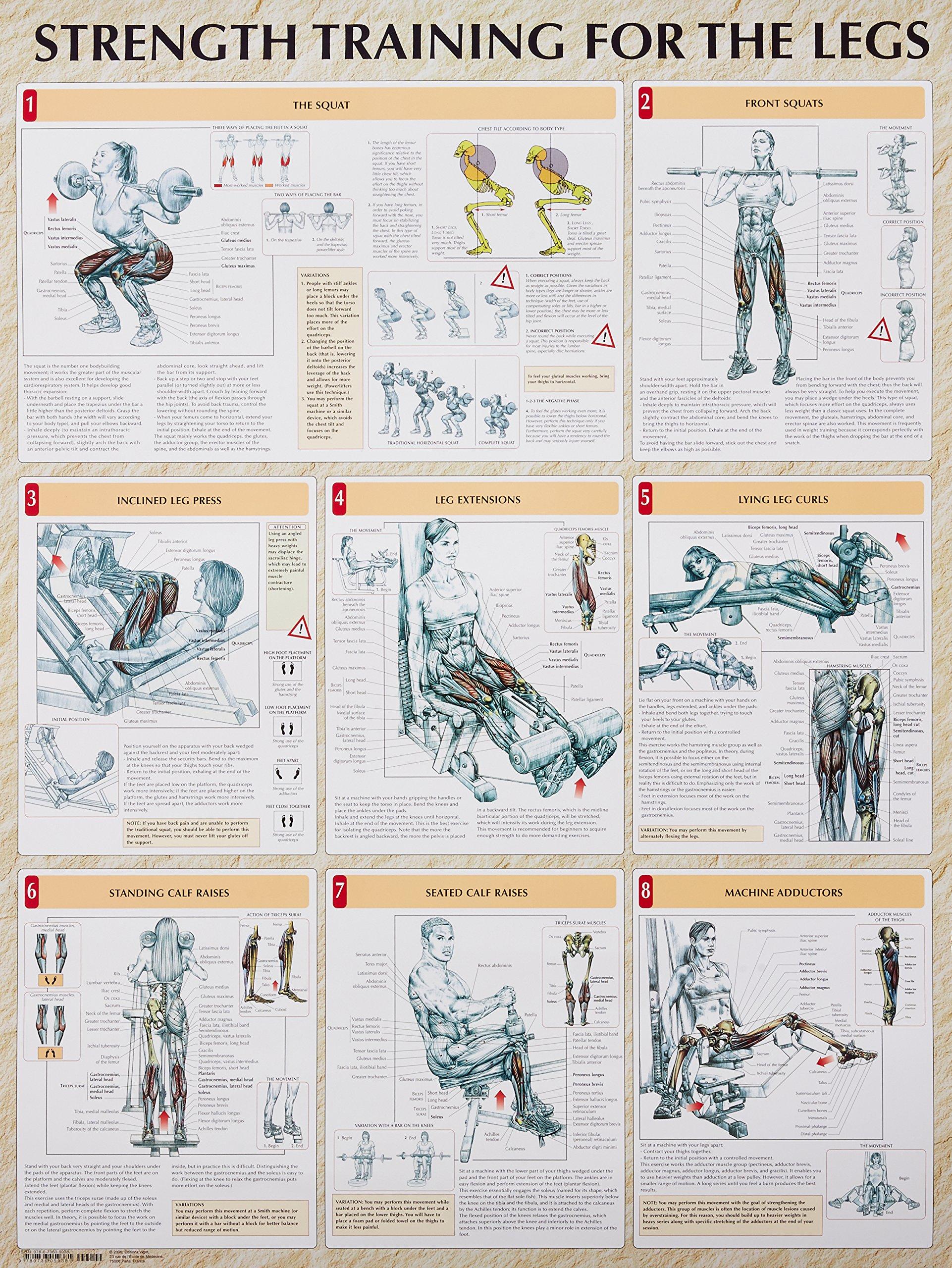 Strength Training Anatomy Strength Training For The Legs Poster