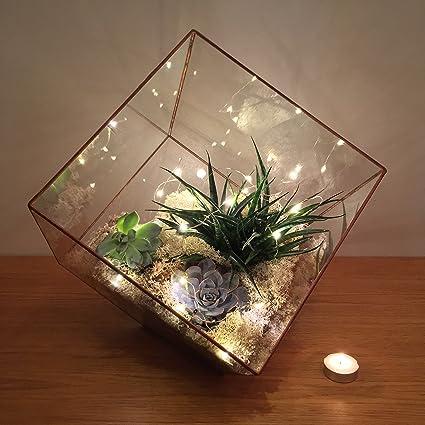 36cm High Extra Large Copper Cube Terrarium With Live Succulent