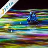小舟とともに踊る鯉によって描かれる水面のドローイングと蓮の花 - Mifuneyama Rakuen Pond