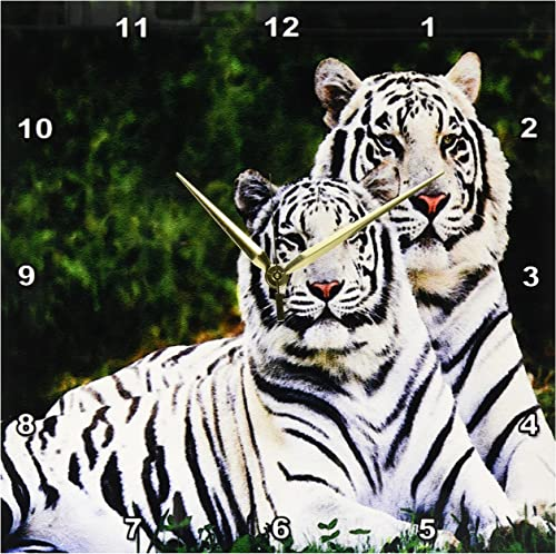 3dRose DPP_54187_2 White Tigers-Wall Clock, 13 by 13-Inch