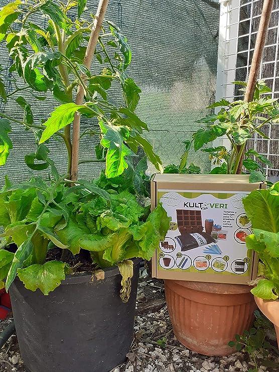 KULTIVERI Set de Cultivo de Lechugas y Tomates de 35 Piezas ...