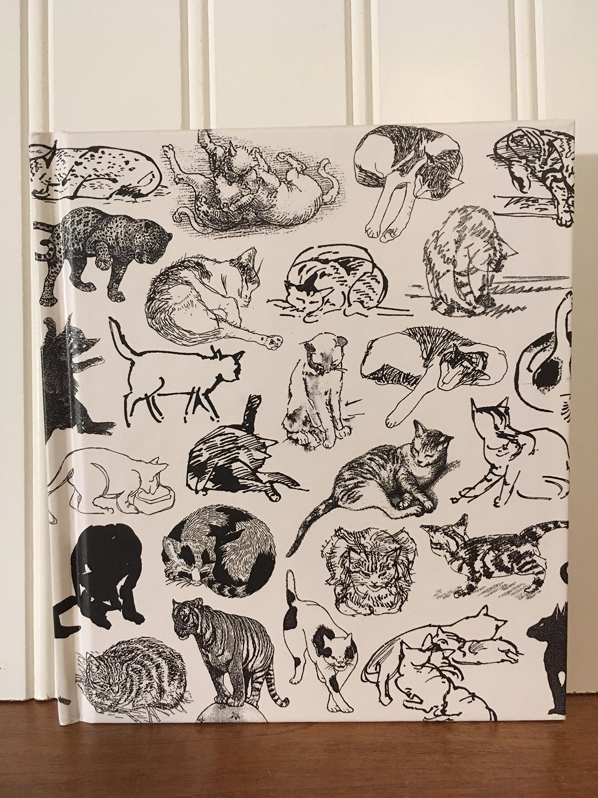 Ways of Drawing Cats: A Guide to Expanding Your Visual Awareness