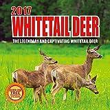 2017 White-Tailed Deer Calendar - 12 x 12 Wall Calendar - 210 Free Reminder Stickers