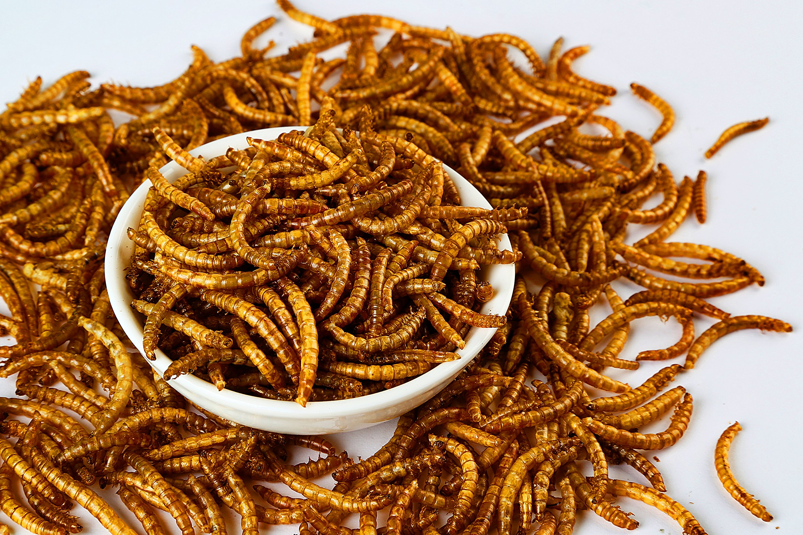 11lbs Bulk Non-GMO Dried Mealworms for Reptile, Tortoise ; Amphibian,Lizard ;Wild Birds; Chichens; Duck etc 3