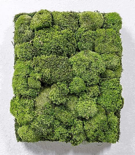Mi Jardín Vertical Musgo Preservado Cuadro Vegetal 30 x 40 cm (Manhattan): Amazon.es: Hogar