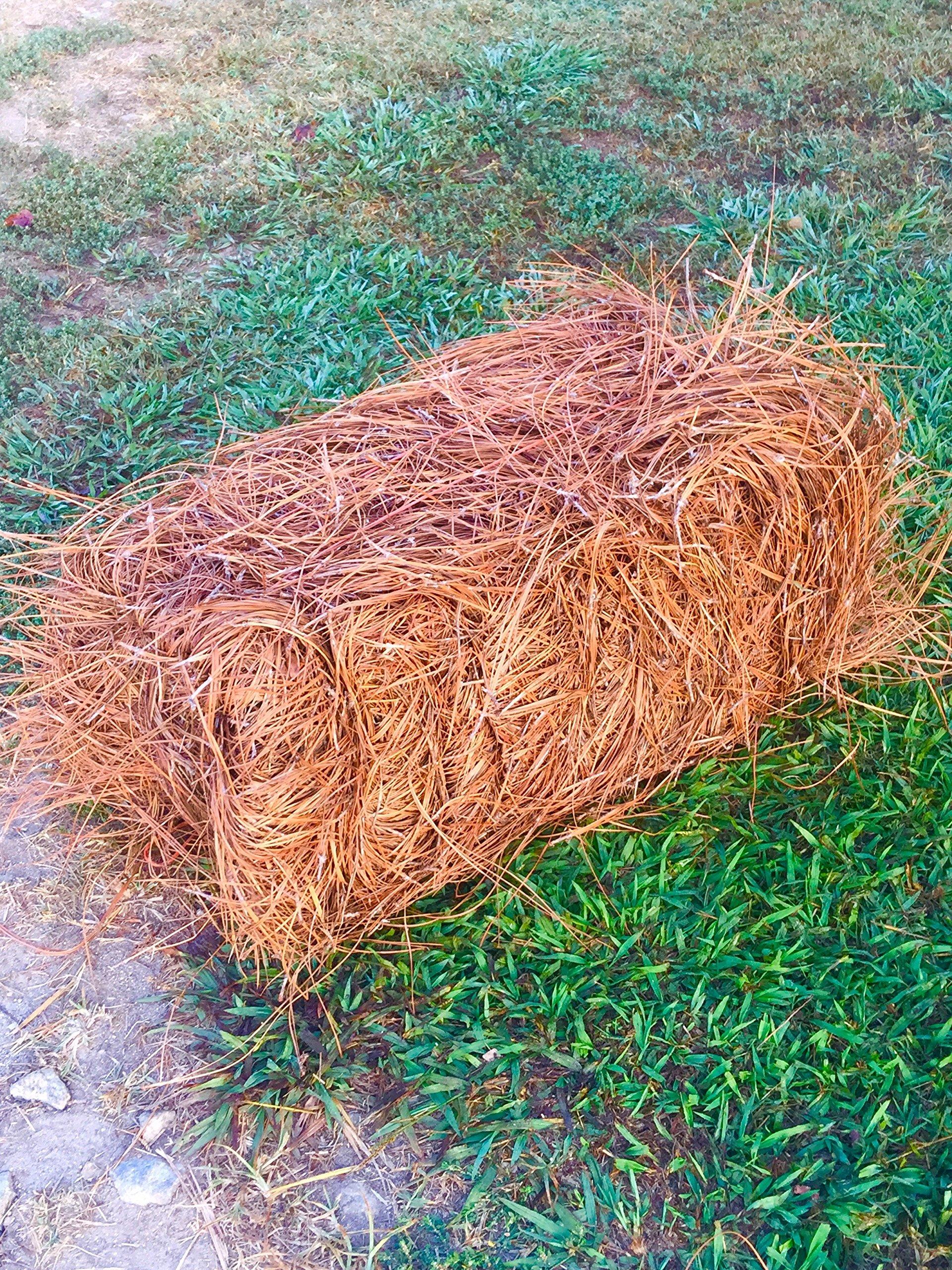 USA Pine Straw - Premium Pine Needle Mulch - Covers 65 Sqft
