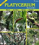 Platycerium (Fernmania Book 1) (English Edition)