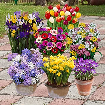 Complete spring flowering bulb collection 300 bulbs in 7 varieties complete spring flowering bulb collection 300 bulbs in 7 varieties mightylinksfo