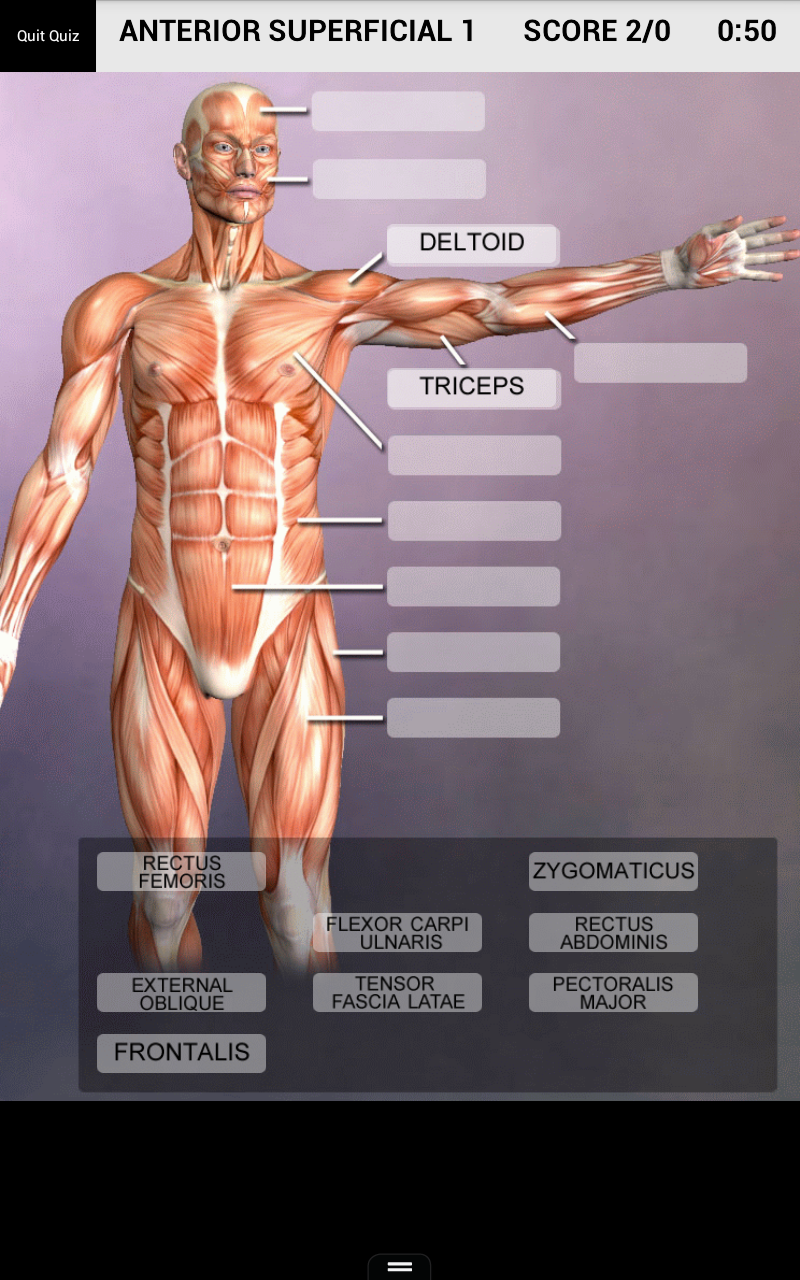 Amazon Com Muscle And Bone Anatomy 3d Appstore For Android
