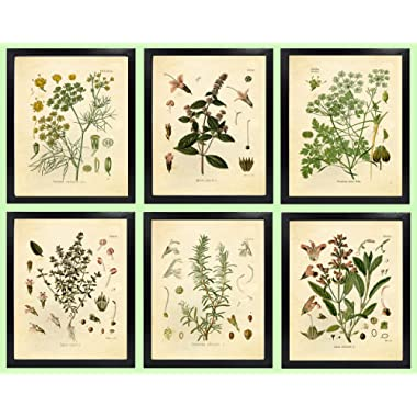 Ink Inc. Set of 6 Herb Botanical Prints, Unframed, 8x10 inch Matte, Thyme, Mint, Rosemary, Parsley, Sage, Fennel