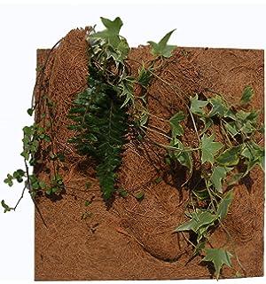 Reptiles Planet - Fondo de plantación Natural para terrario (20 x 30 x 1 cm