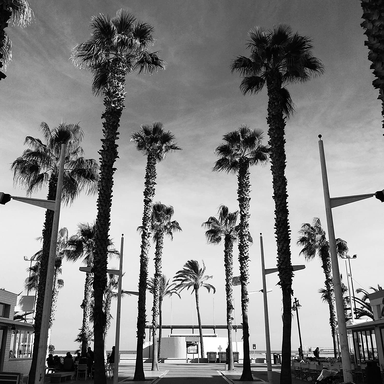 Black and white travel beach palm tree photography print taken in