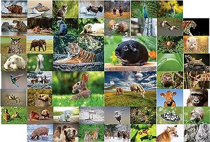 Postales de animales - 20 postales diferentes con animales, ideal ...