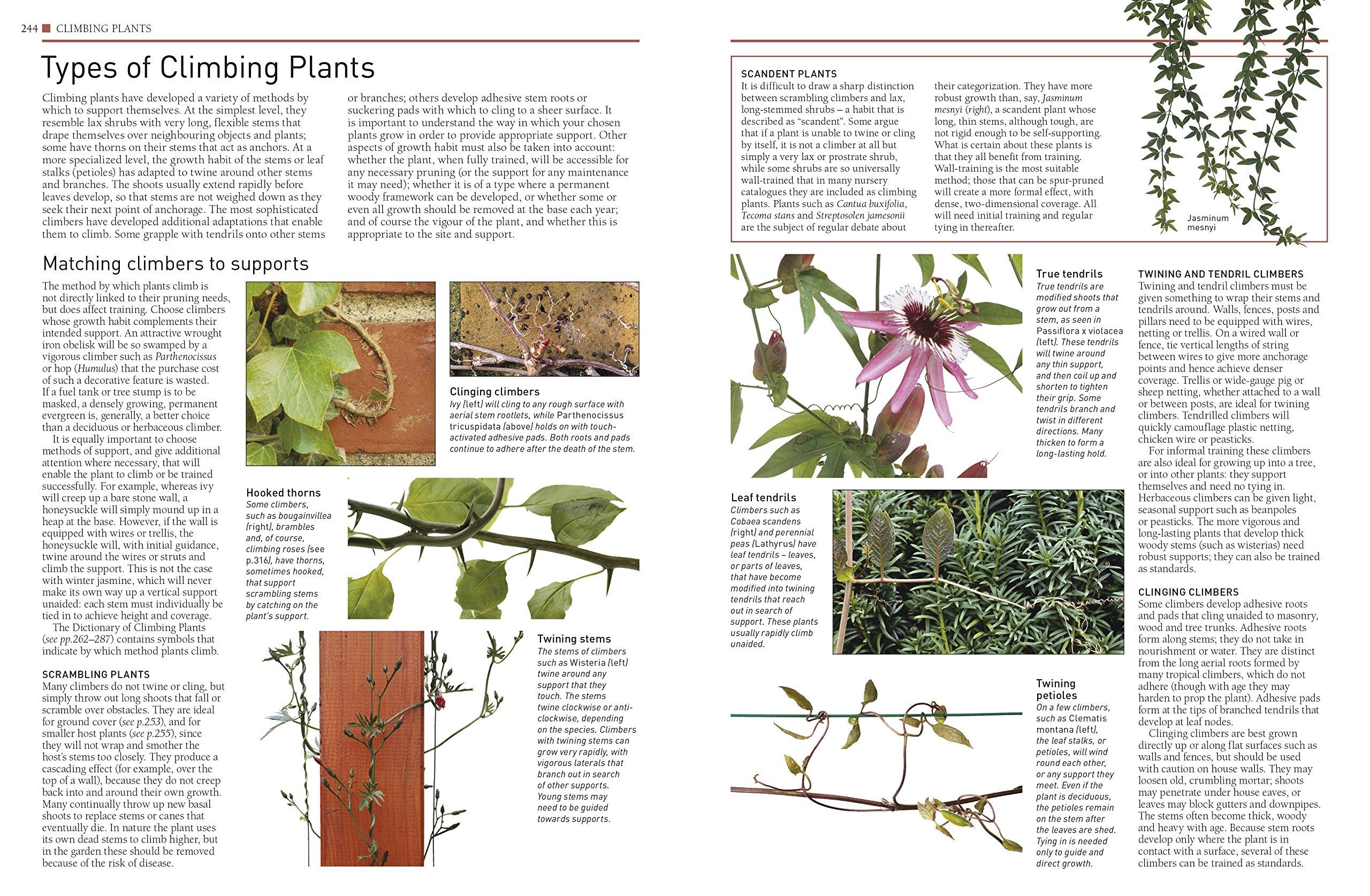 RHS Pruning and Training: Amazon.es: DK: Libros en idiomas ...