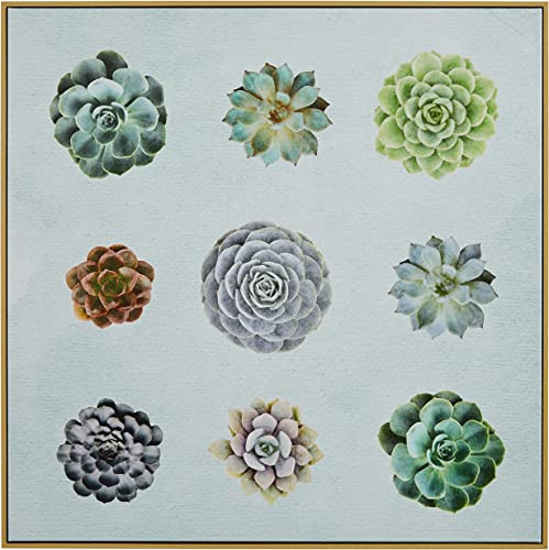 Amazon Brand Rivet Six Succulent Print