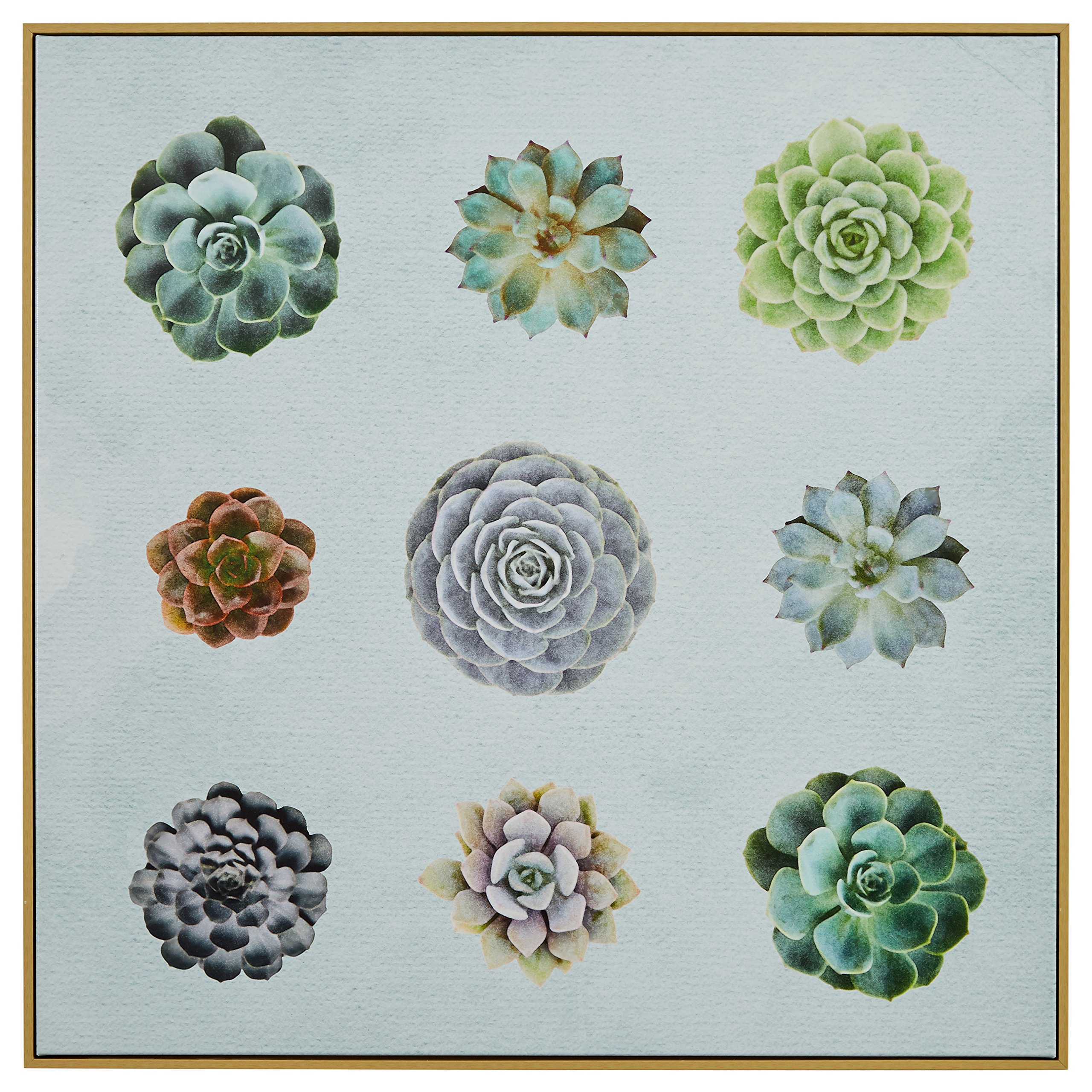 Nine Succulent Print in Birch Floater Frame, 38''x 38''