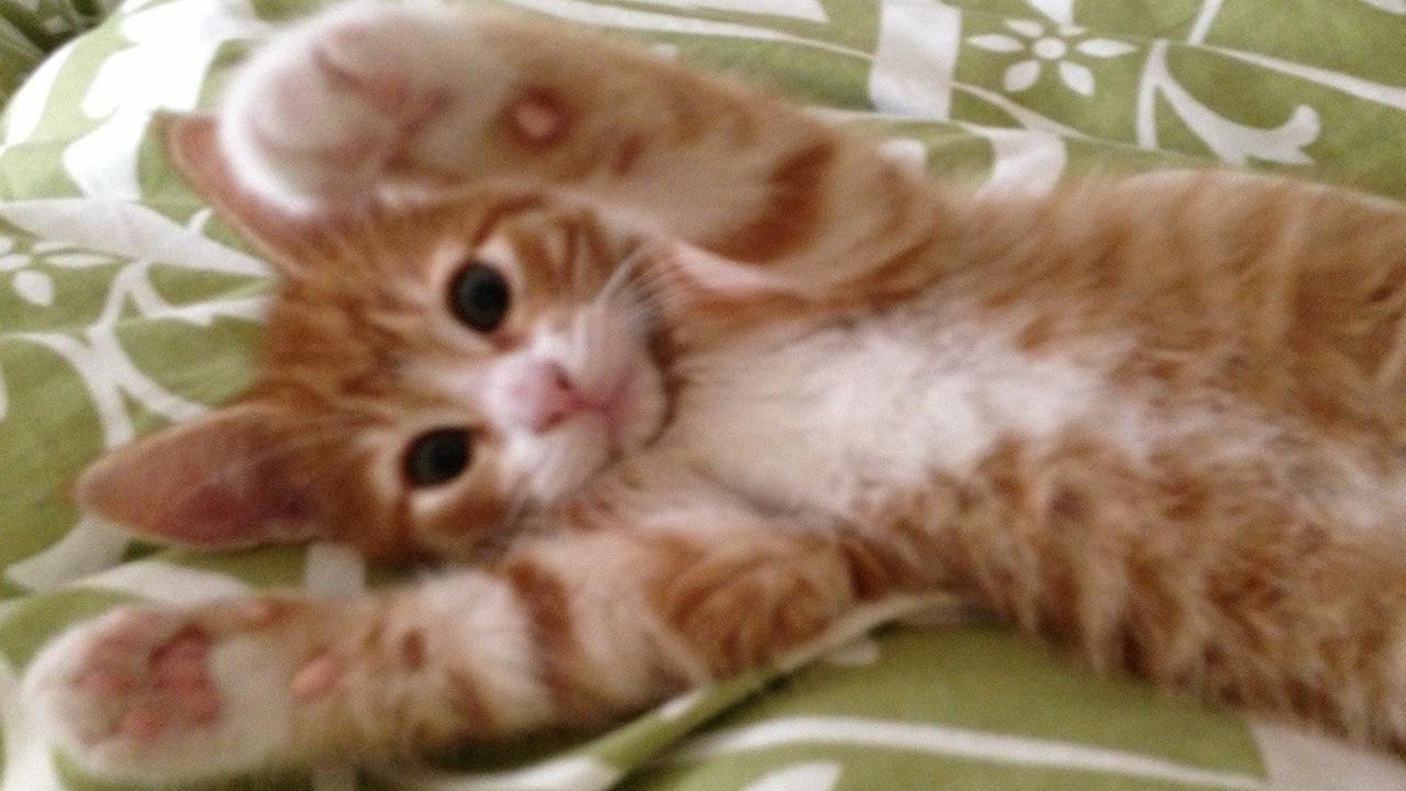 Cuddly kitten