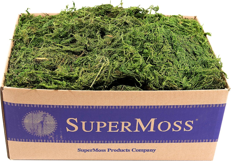 SuperMoss (25325) Forest Moss Preserved, Fresh Green, 3lbs