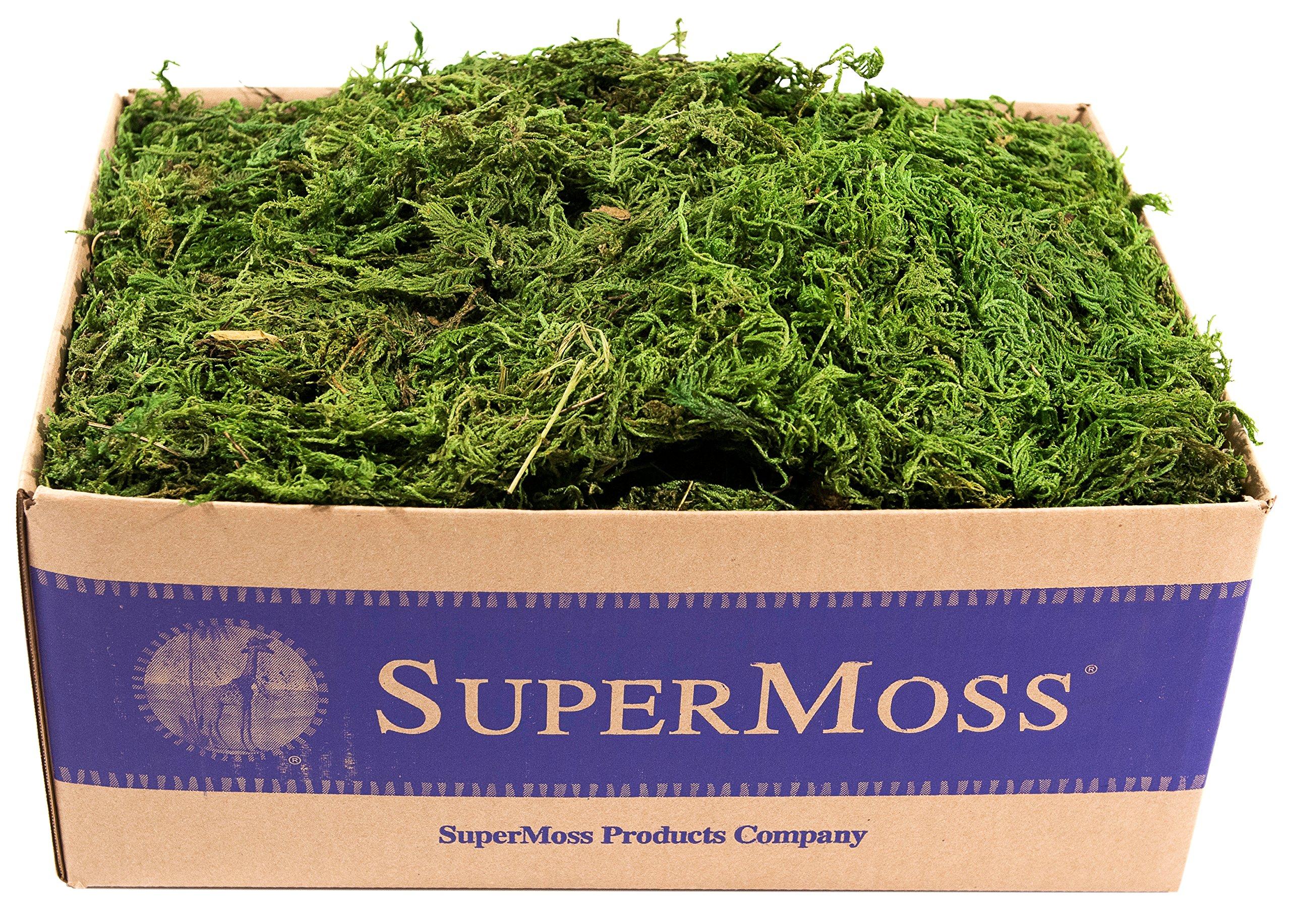 SuperMoss (25325) Forest Moss Preserved, Fresh Green, 3lbs by Super Moss