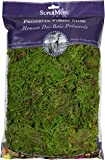 SuperMoss (25322) Forest Moss Preserved, Fresh Green, 8oz