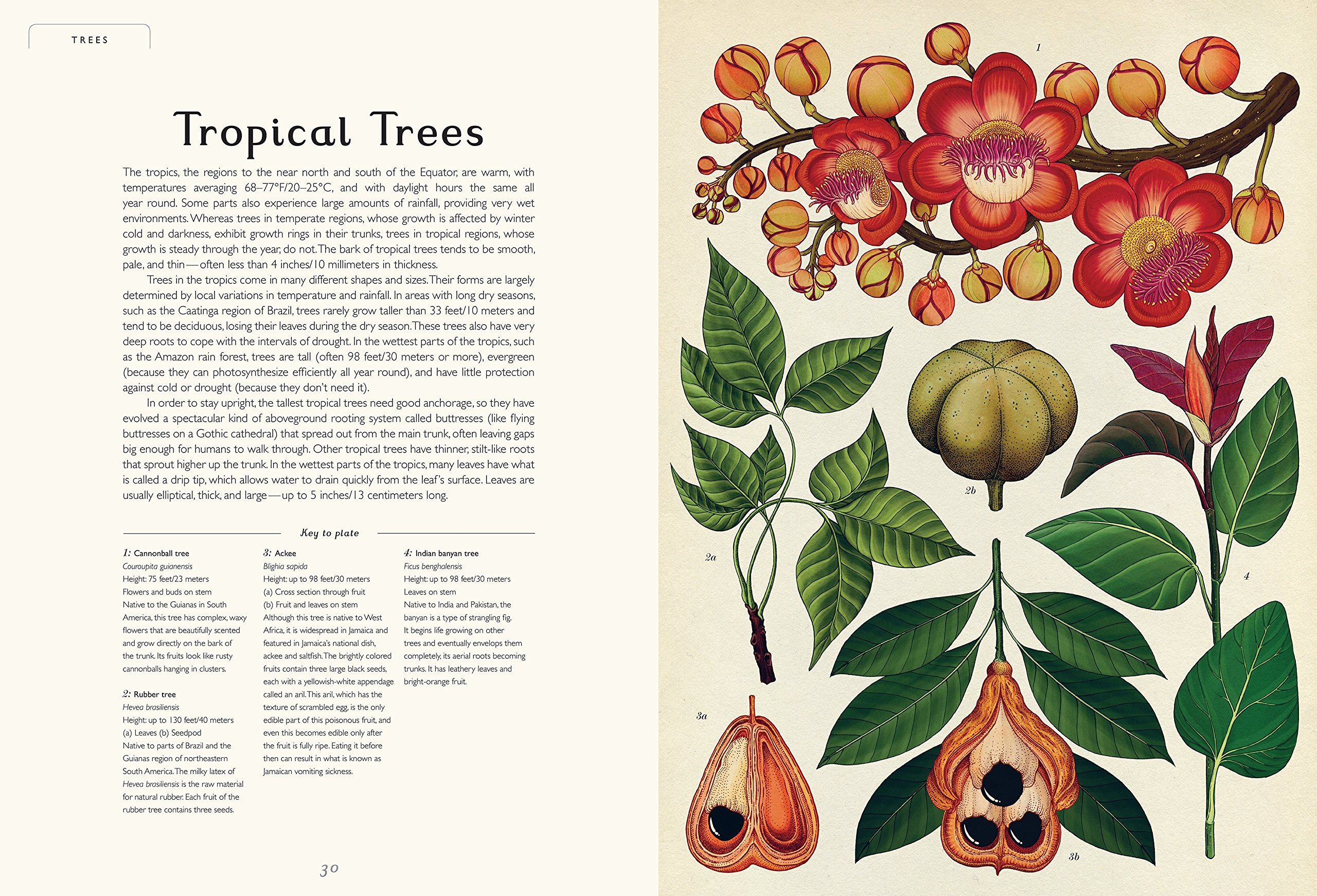 Botanicum: Welcome to the Museum by BIG PICTURE (Image #4)