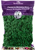 Super Moss 21757 Reindeer Moss Preserved, Forest, 8oz (200 cubic inch)