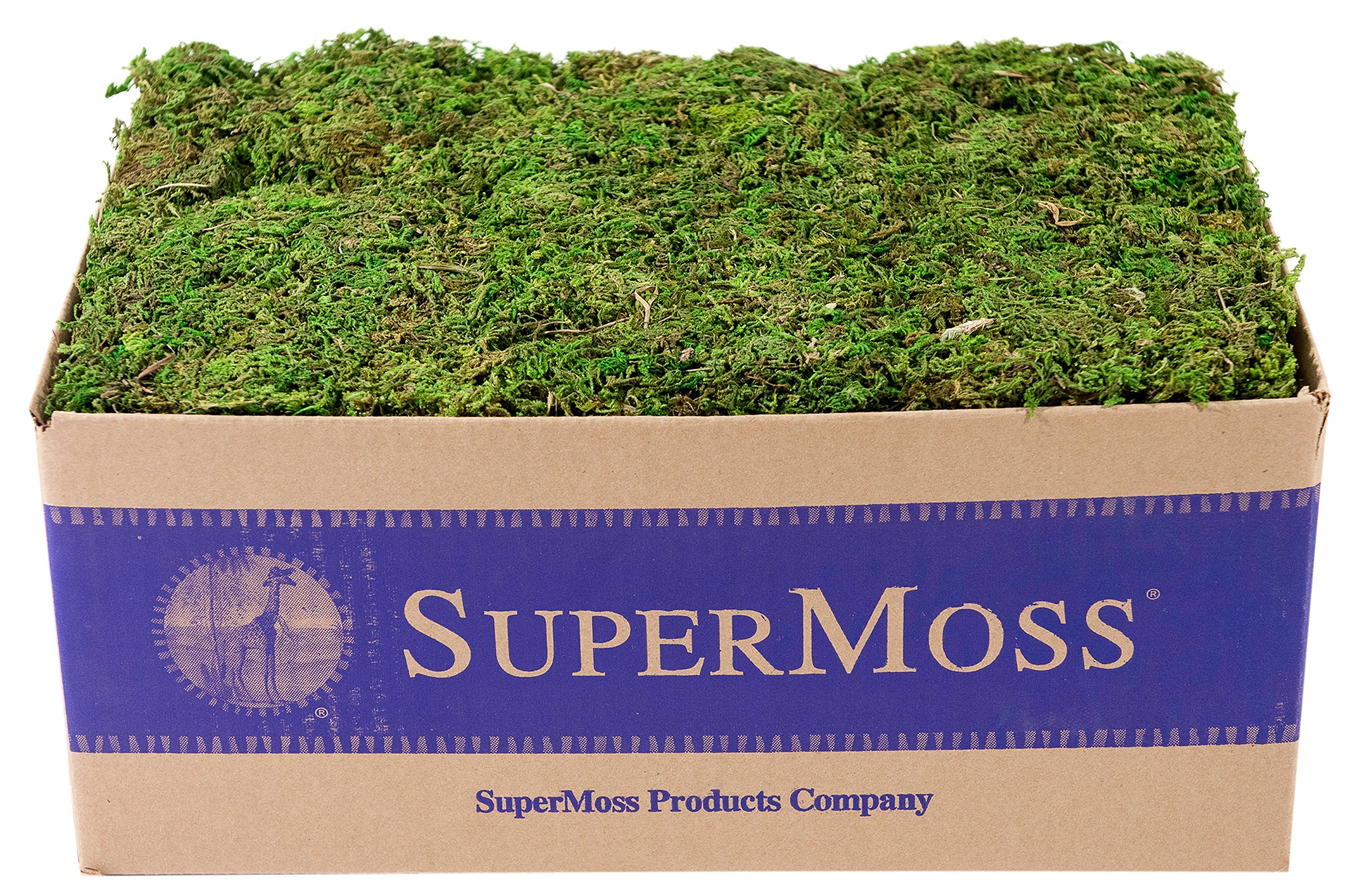 Super Moss (23805) Mountain Moss Preserved, Fresh Green, 3lbs