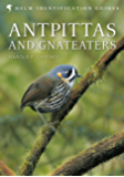 Antpittas and Gnateaters (Helm Identification Guides) (English Edition)