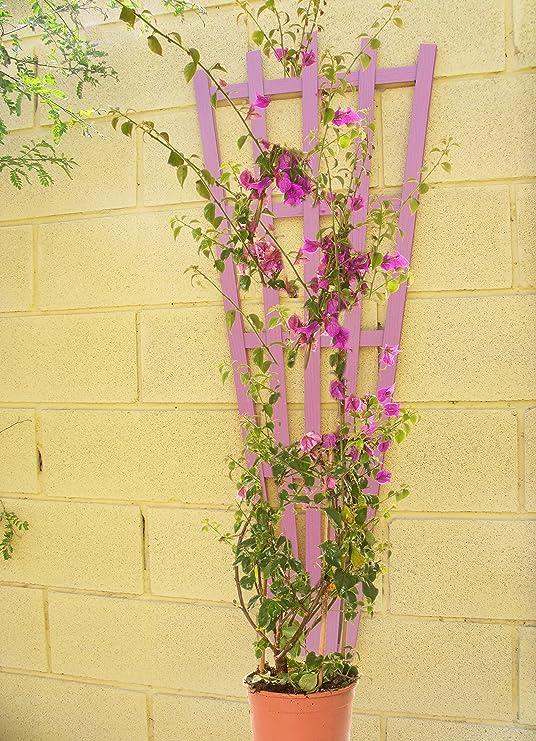 Celosía MADERA COMPOSITE Rosa 50x125 cm. Modelo Rangiroa: Amazon.es: Jardín