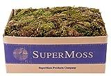 SuperMoss (22160) Sheet Moss Mini (Shredded) Dried, Fresh Green, 3lbs